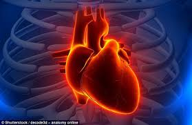 động mạch vành hay còn gọi là bệnh tim